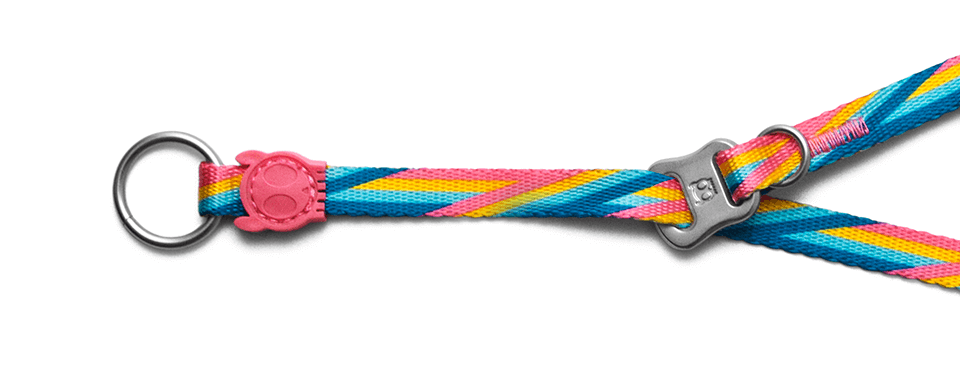 Bowie | Obedience Dog Collar
