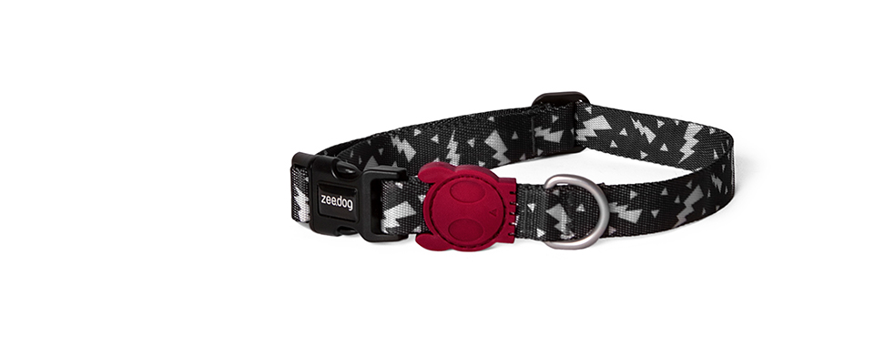 Flash | Dog Collar