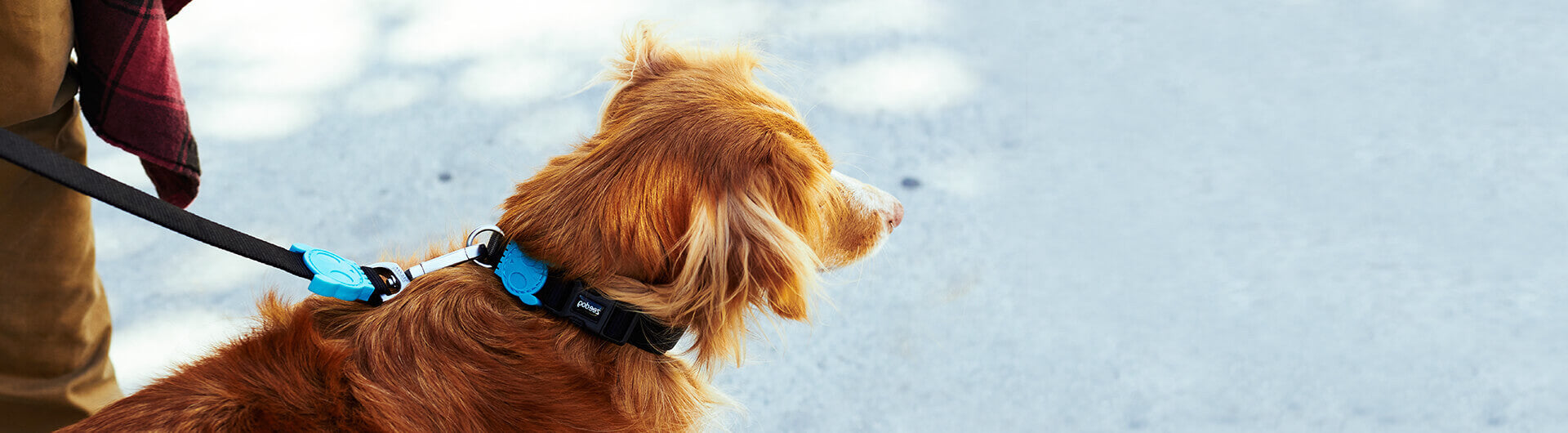 Mutt wearing Monoby Collar | Zee.Dog
