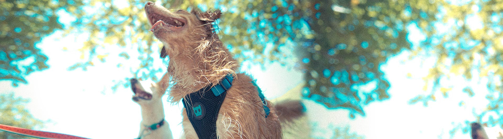 Dog wearing Monoby air mesh harness | Zee.Dog