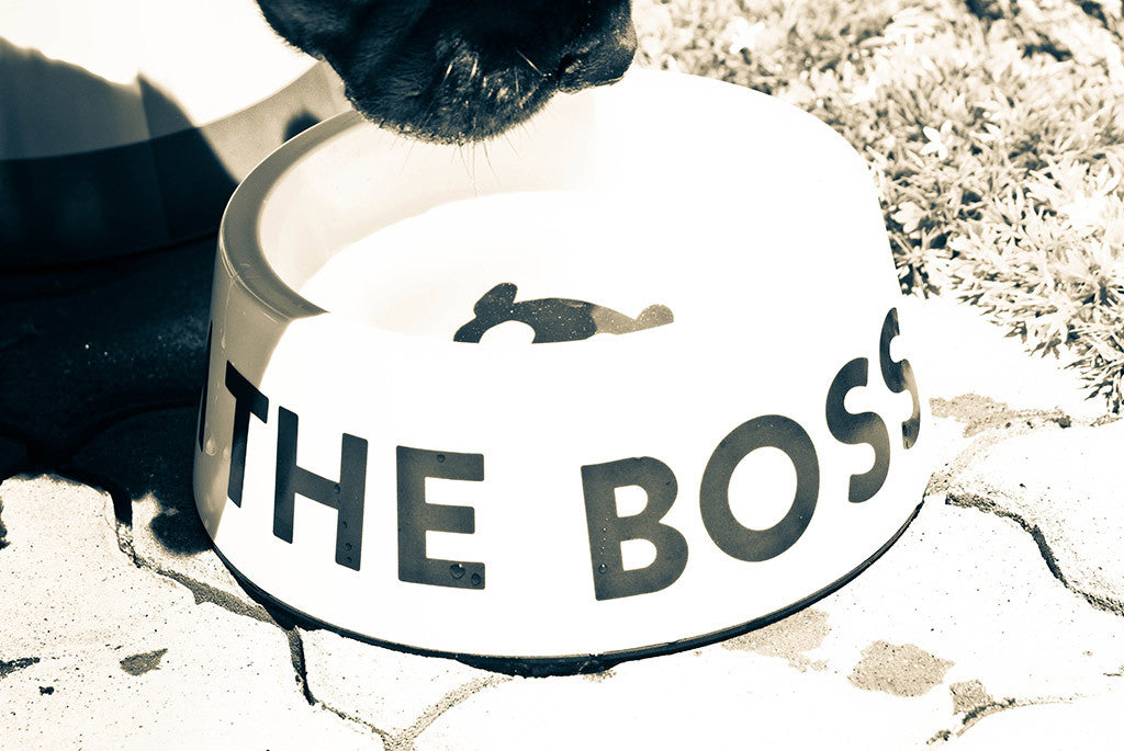 I'm The Boss Dog Bowl | Zee.Dog