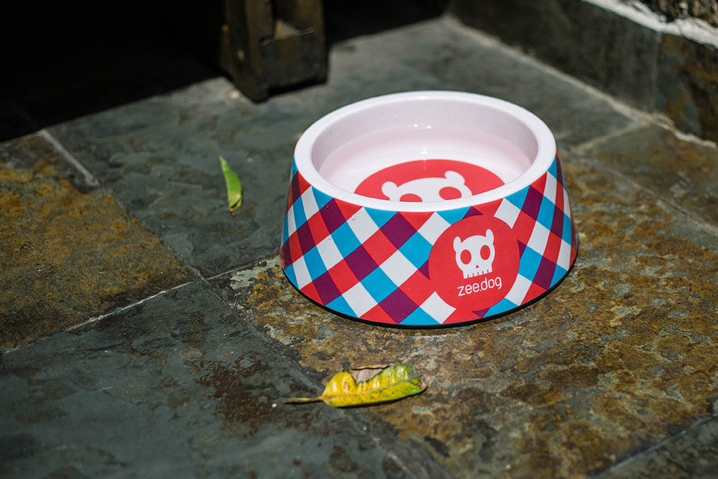 Gummy | Dog Bowl