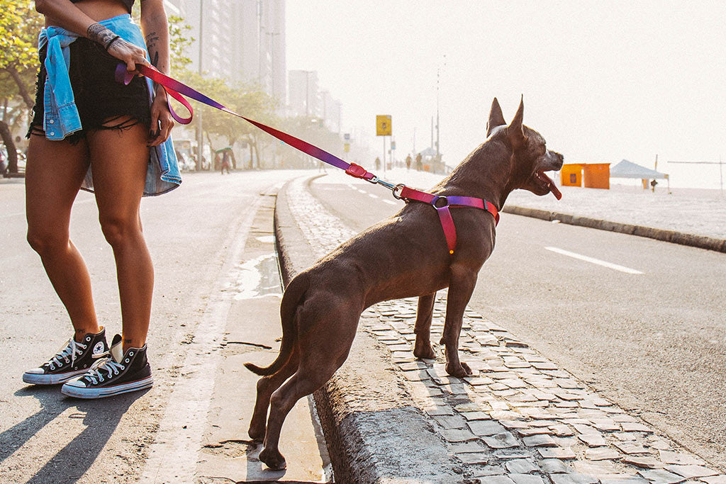 Juno | Dog Leash