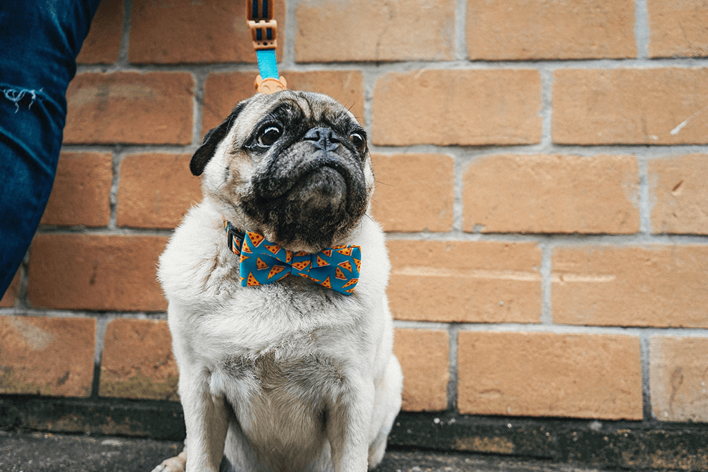 Dog wearing NYC Pizza Large Bow Tie | Zee.Dog
