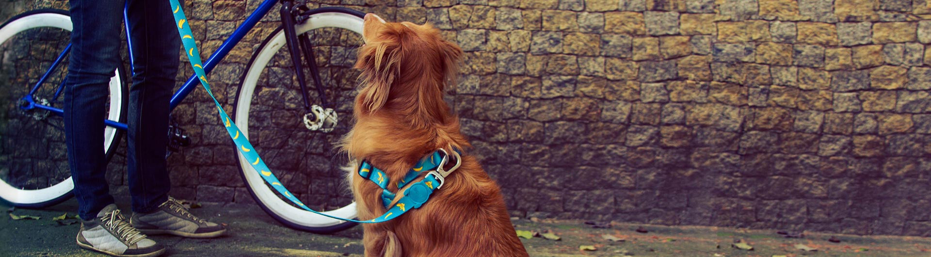 Banana Shake Step-in Harness | Zee.Dog