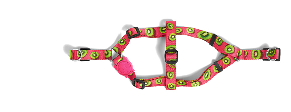 Juice | Dog Harness