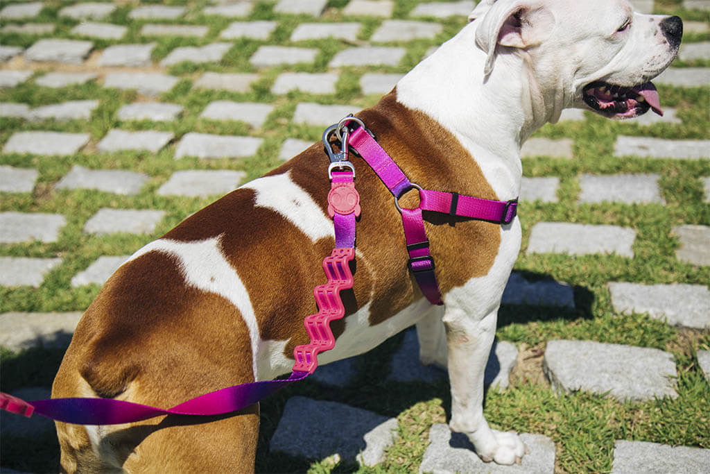 Juno | Dog Harness