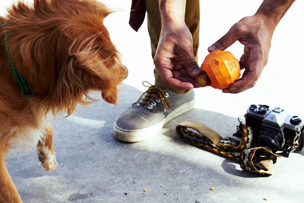 Dog playing with Super Orange Dog Toy | Zee.Dog