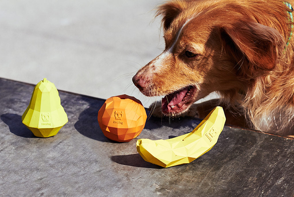 Dog playing with Super Pear Dog Toy | Zee.Dog