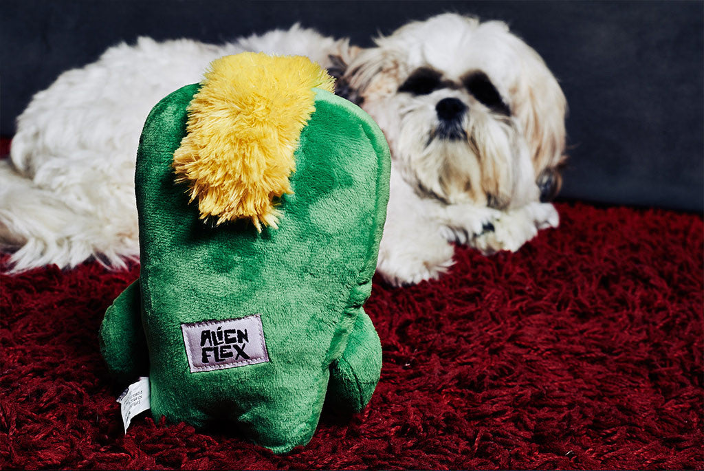 Shih Tzu playing with Alien Flex Gro Dog Toy | Alien Flex