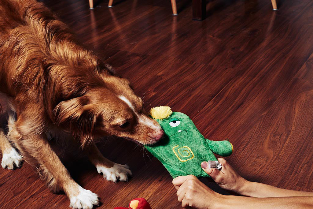 Dog playing with Alien Flex Gro Dog Toy | Alien Flex