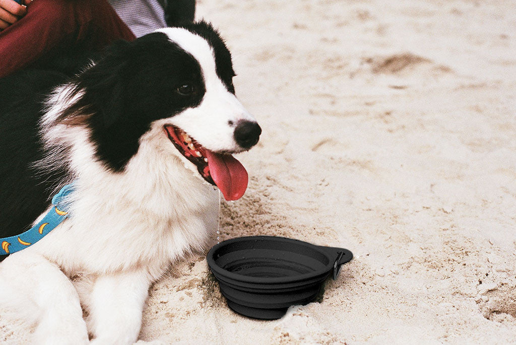 Border Collie with Black Go Bowl | Zee.Dog