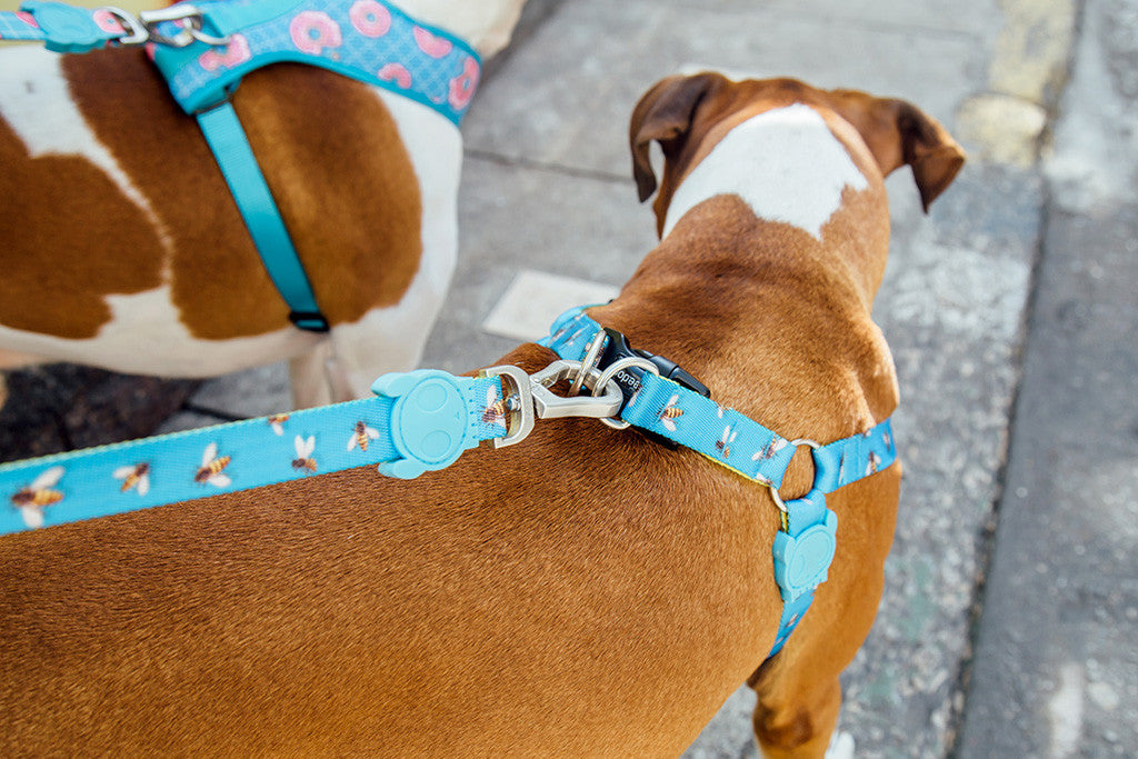 Dog wearing buzz harness | Zee.Dog