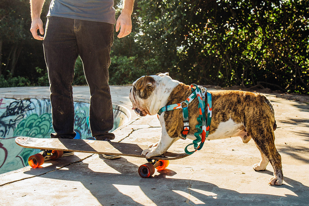 Dog wearing camo harness | Zee.Dog