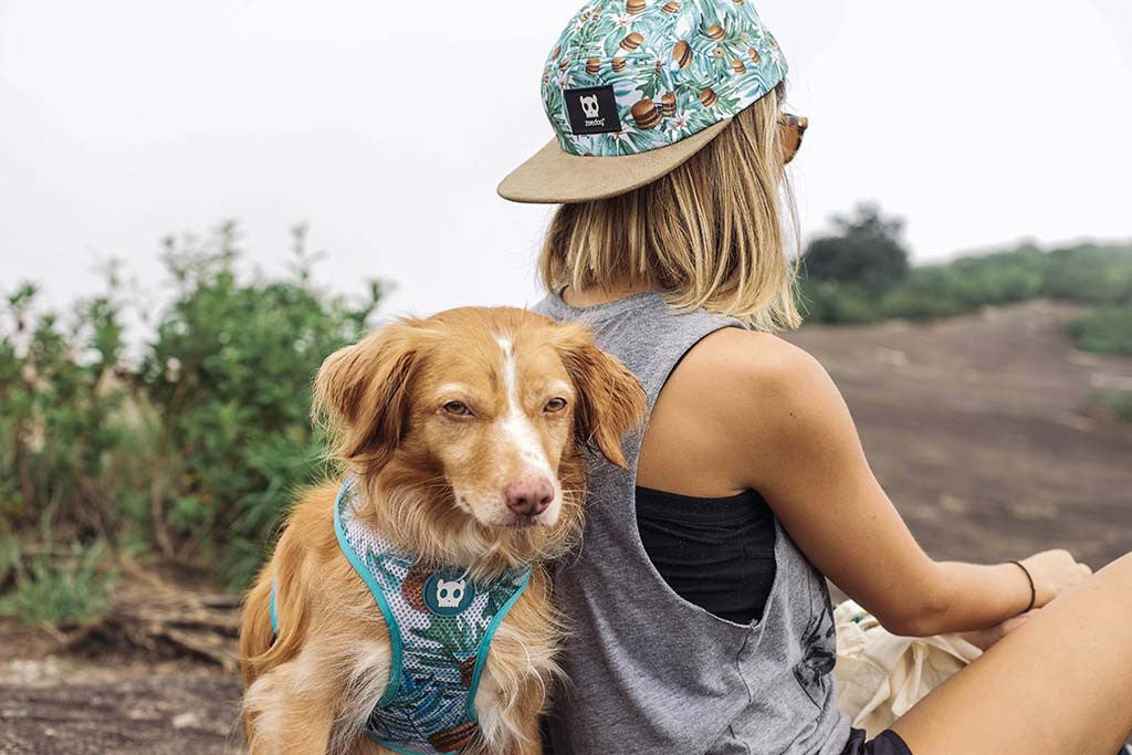 McZee | Mesh Plus Dog Harness
