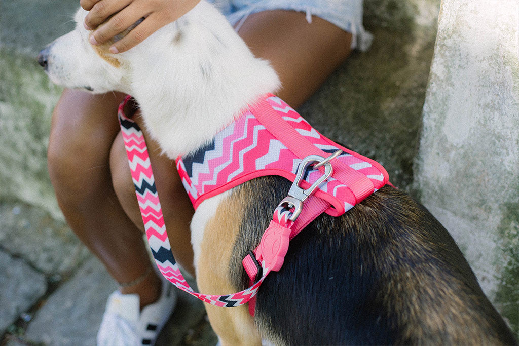 Maui | Air Mesh Harness