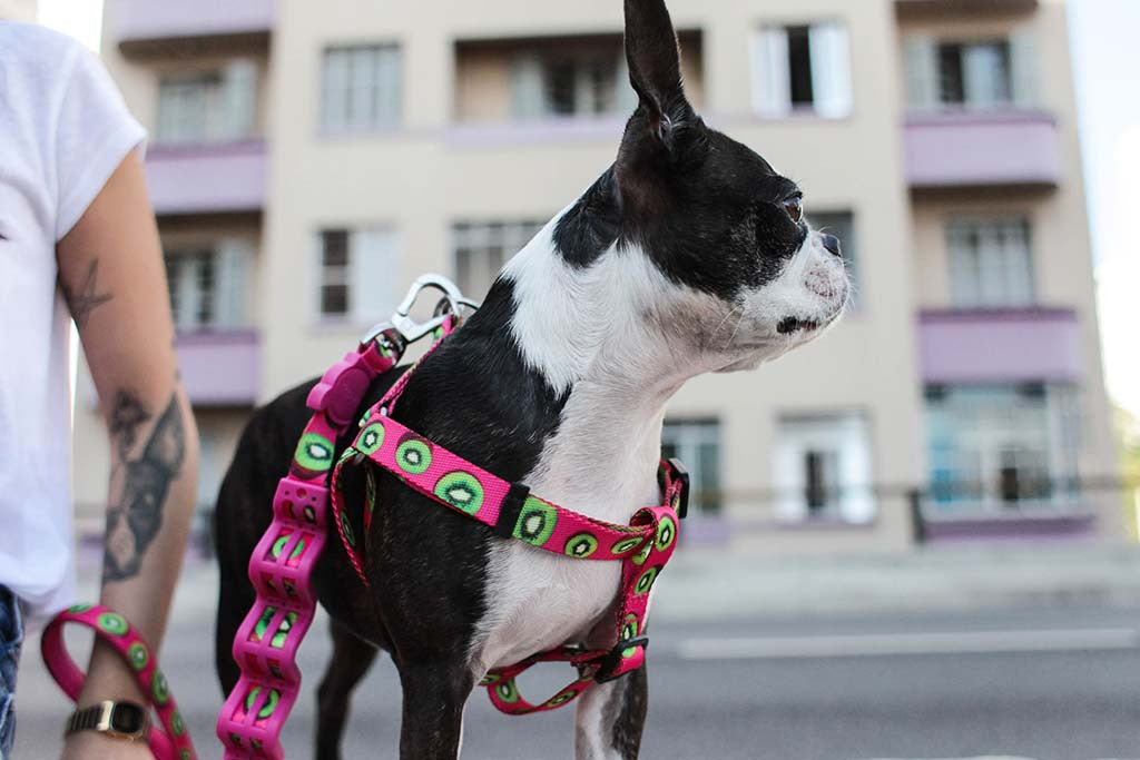 Dog Wearing Juice Harness | Zee.Dog