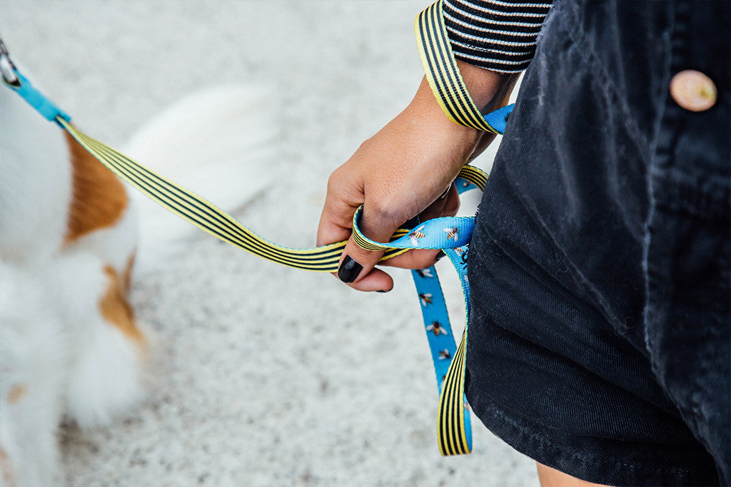 Buzz | Leash