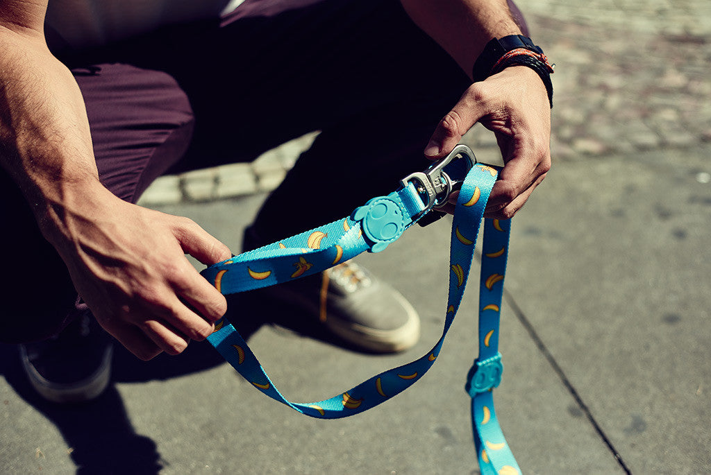 Banana Shake dog leash | Zee.Dog