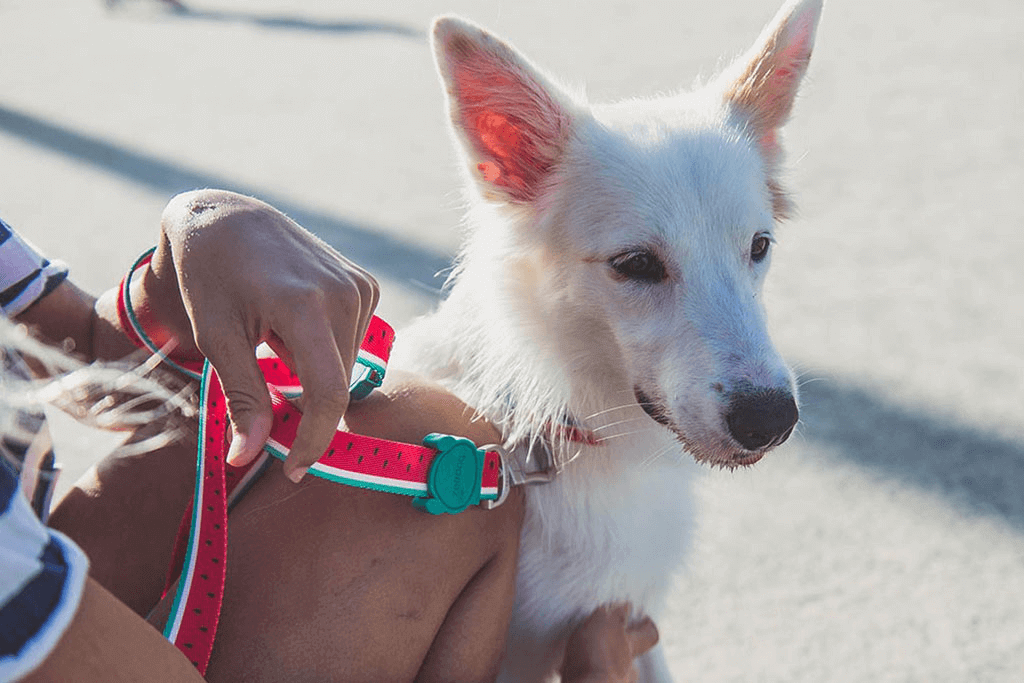 Dog wearing Lola Dog Leash | Zee.Dog