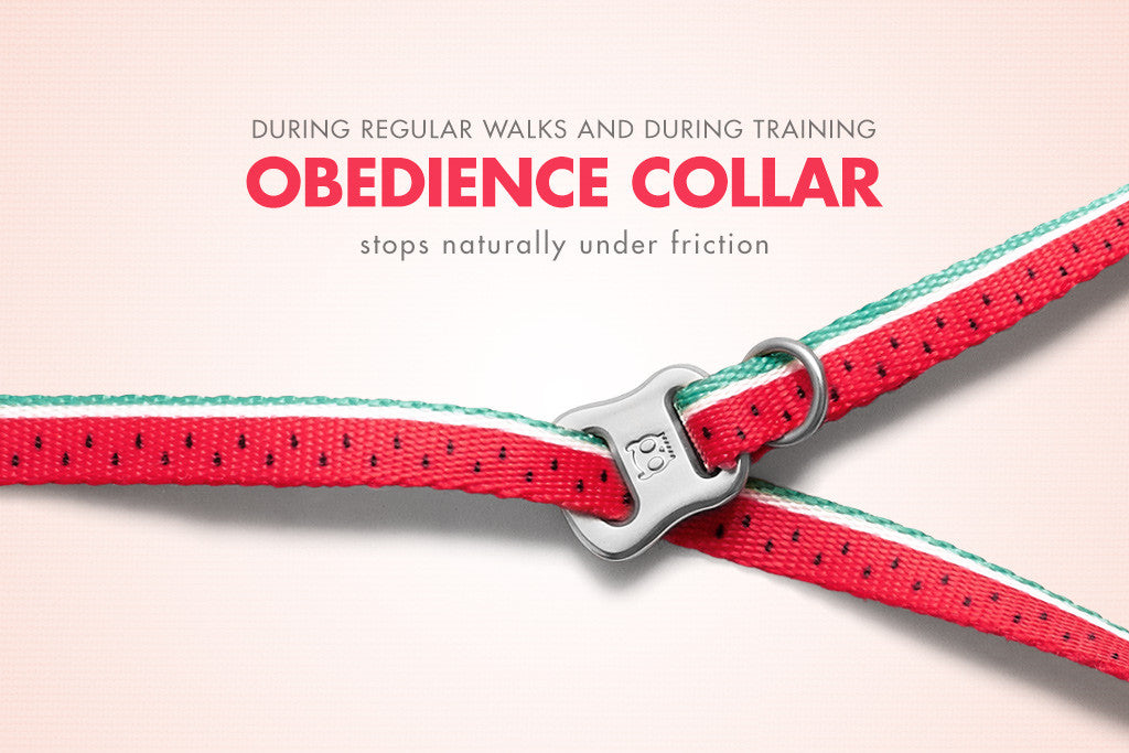 Lola Obedience Dog Collar - Feature | Zee.Dog