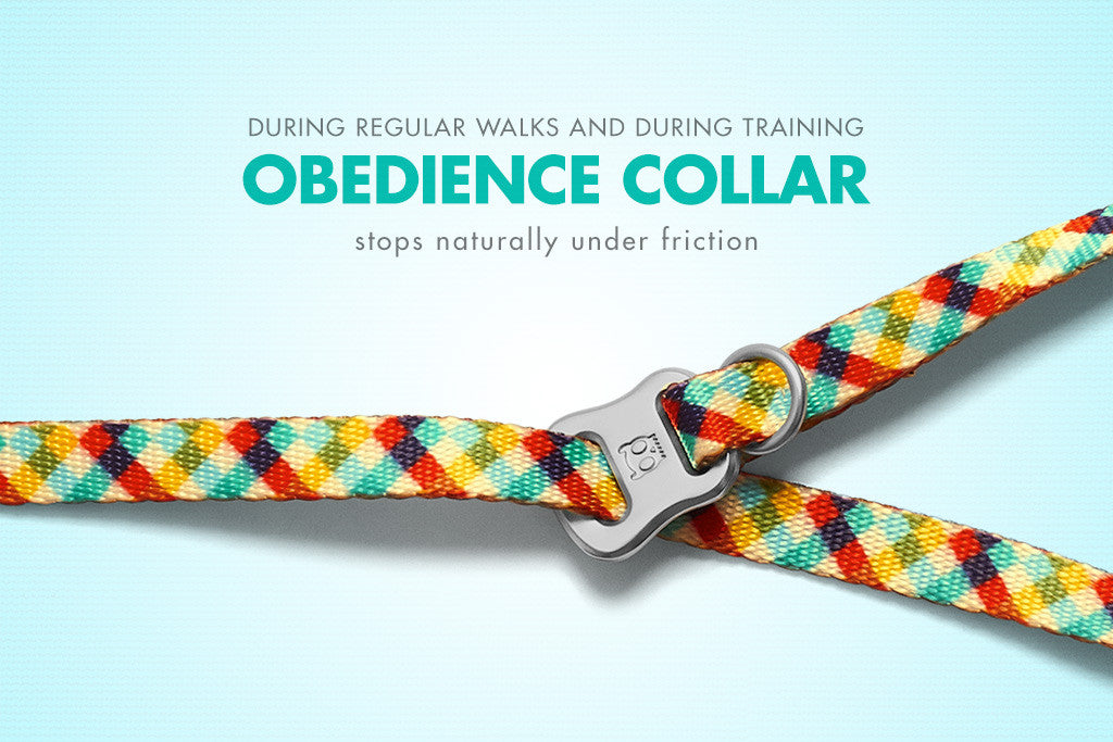 Phantom Obedience Dog Collar | Zee.Dog