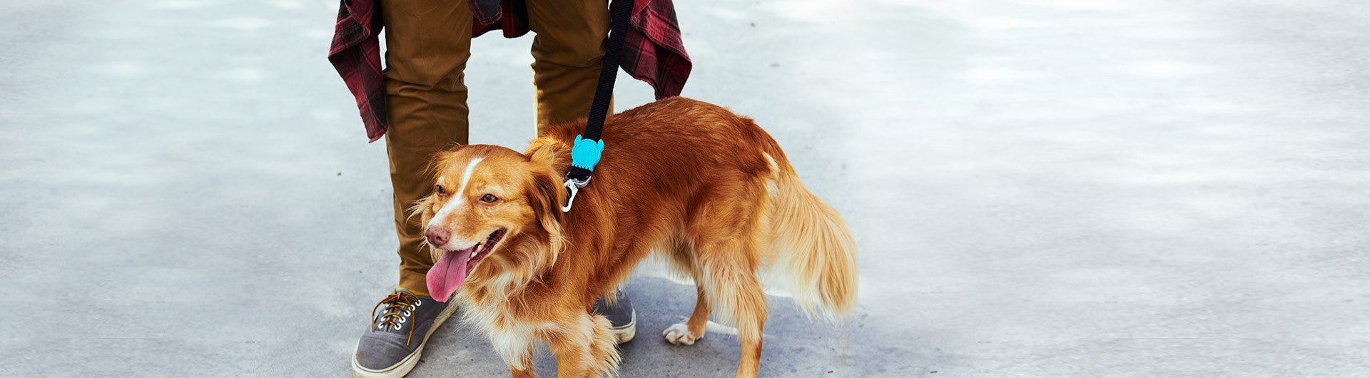 Monoby | Dog Leash