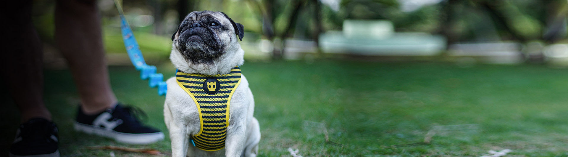 Dog wearing buzz mesh harness | Zee.Dog