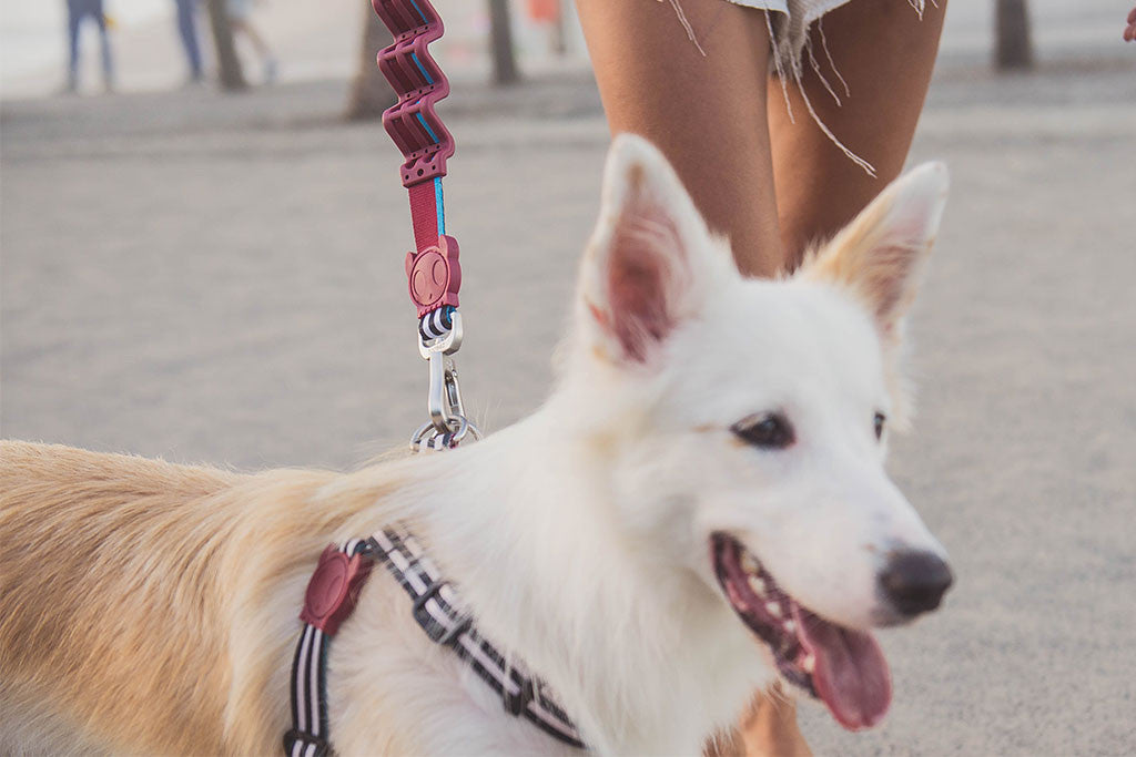 Border Collie wearing Asos Ruff Leash | Zee.Dog