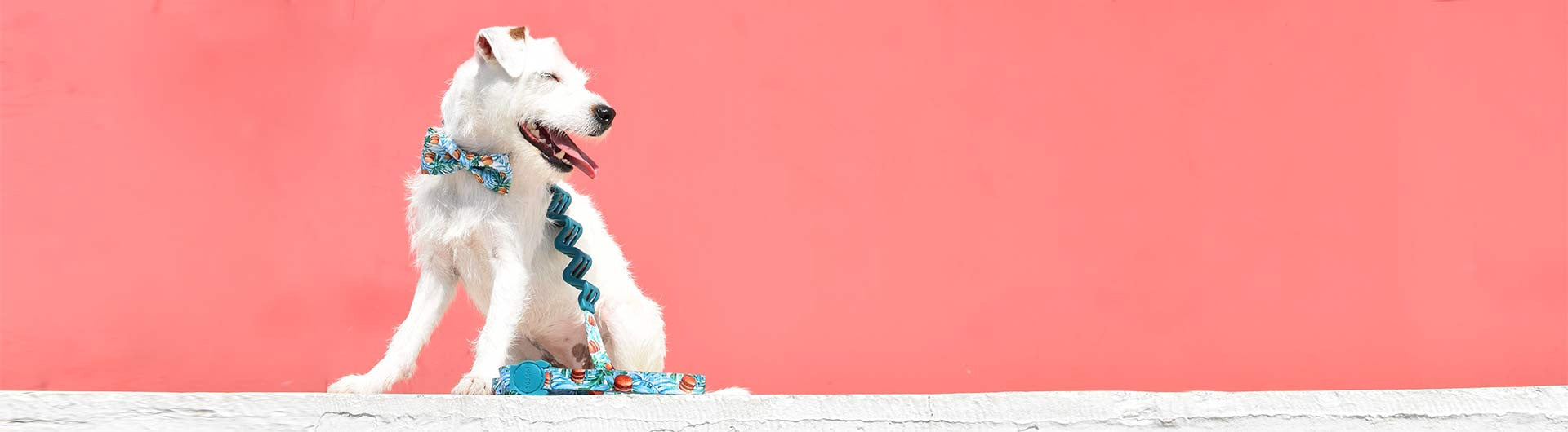 Jack Russel wearing McZee Large Ruff Leash | Zee.Dog