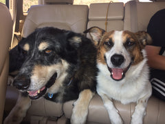 National Pet Day pic of dogs Jethro and Rosie