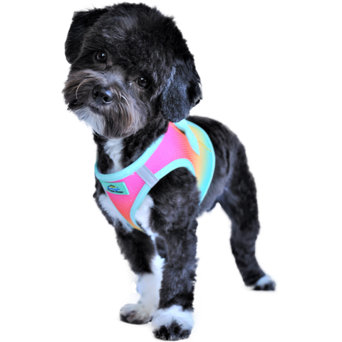 American River Choke Free Dog Harness Ombre Collection - Beach Party