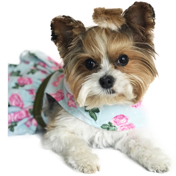 China Doll Pink Rose Harness Dog Dress with Matching Leash