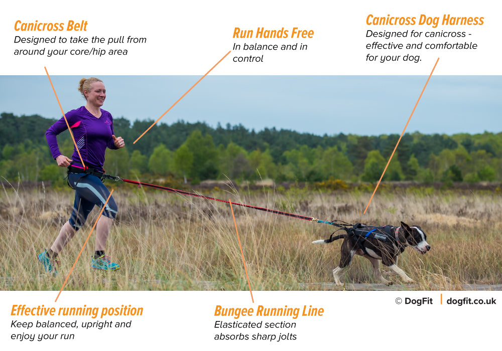 Canicross kit - running with your dog