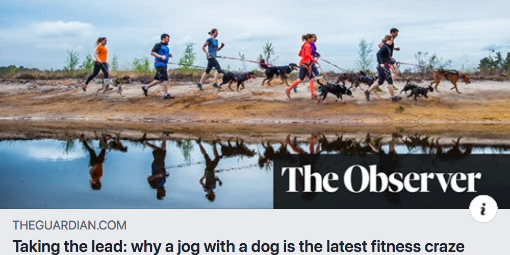 DogFit Interview in The Guardian