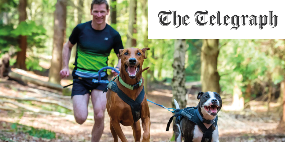 DogFit in The Telegraph