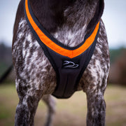 Front view of canicross harness on dog