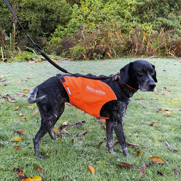 Dog wearing Non-stop hunting jacket