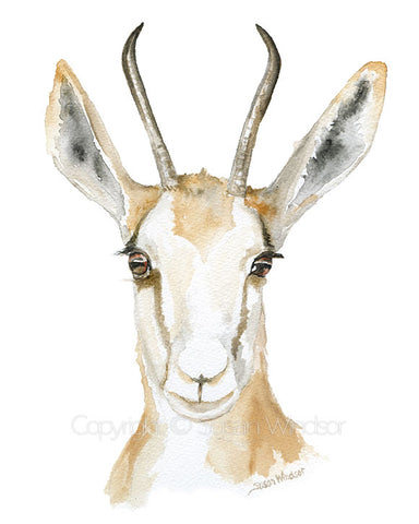 Antelope Watercolor Springbok