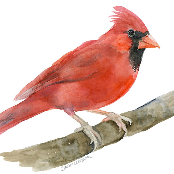 Red Cardinal Original Watercolor Painting