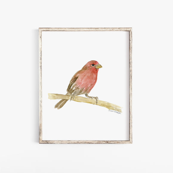 House Finch Bird Watercolor