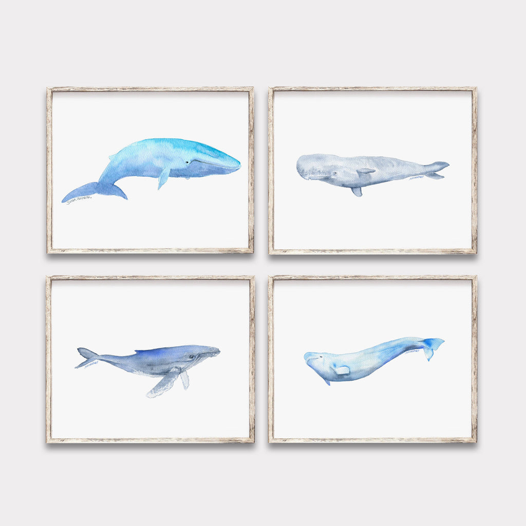 Whale Watercolor Art Prints - Set of 4 Animals - Blue, Humpback, Sperm, and Beluga Whales