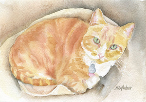 Custom Pet Portrait Watercolor Painting - 11x14