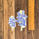 Bluebonnet Sticker