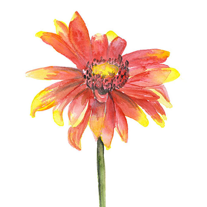 Indian Blanket Wildflower Original Watercolor Painting