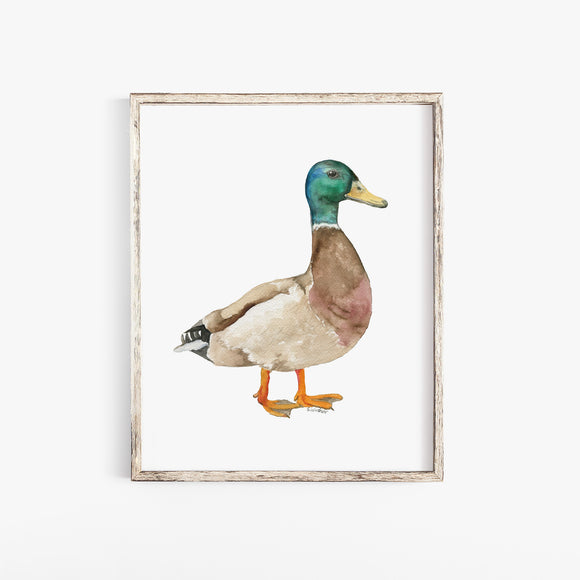 Mallard Duck Watercolor Fine Art Print