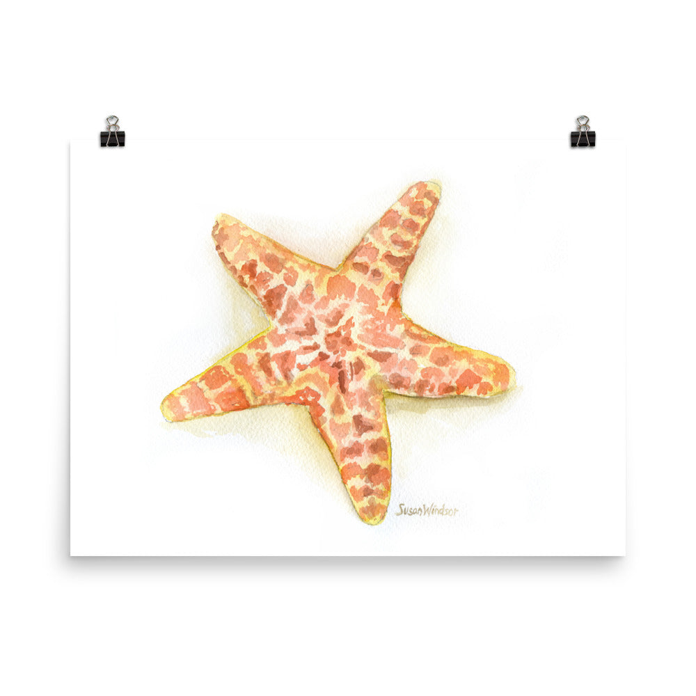Sea Star Starfish Watercolor
