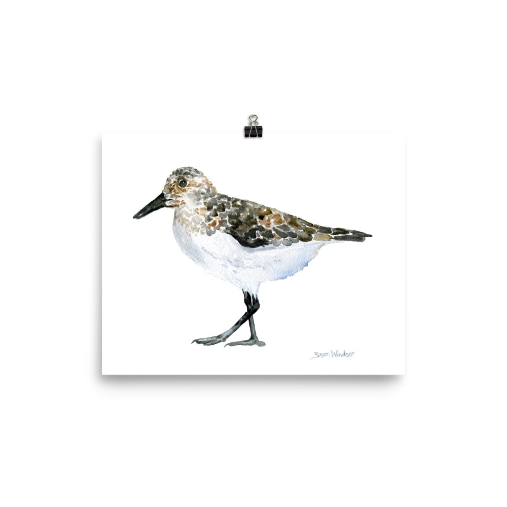 Sandpiper Watercolor