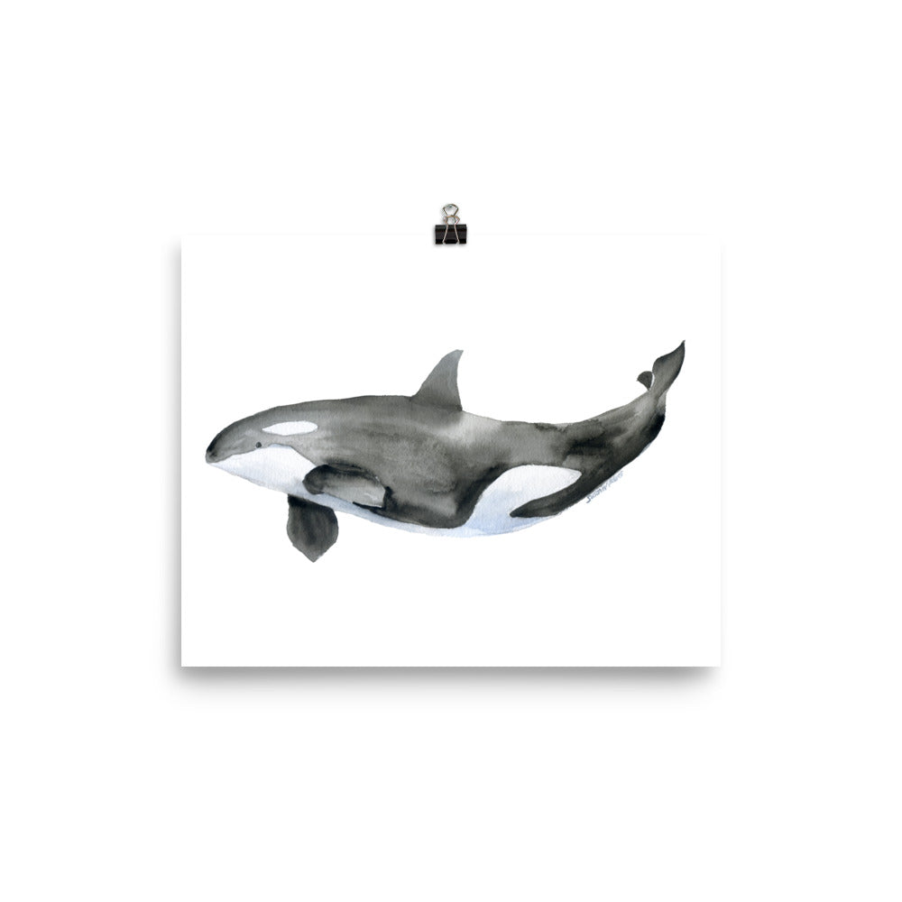 Orca Killer Whale Watercolor