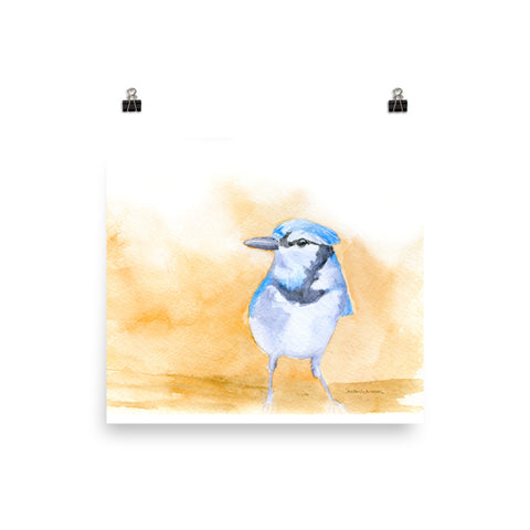 Bluejay Watercolor